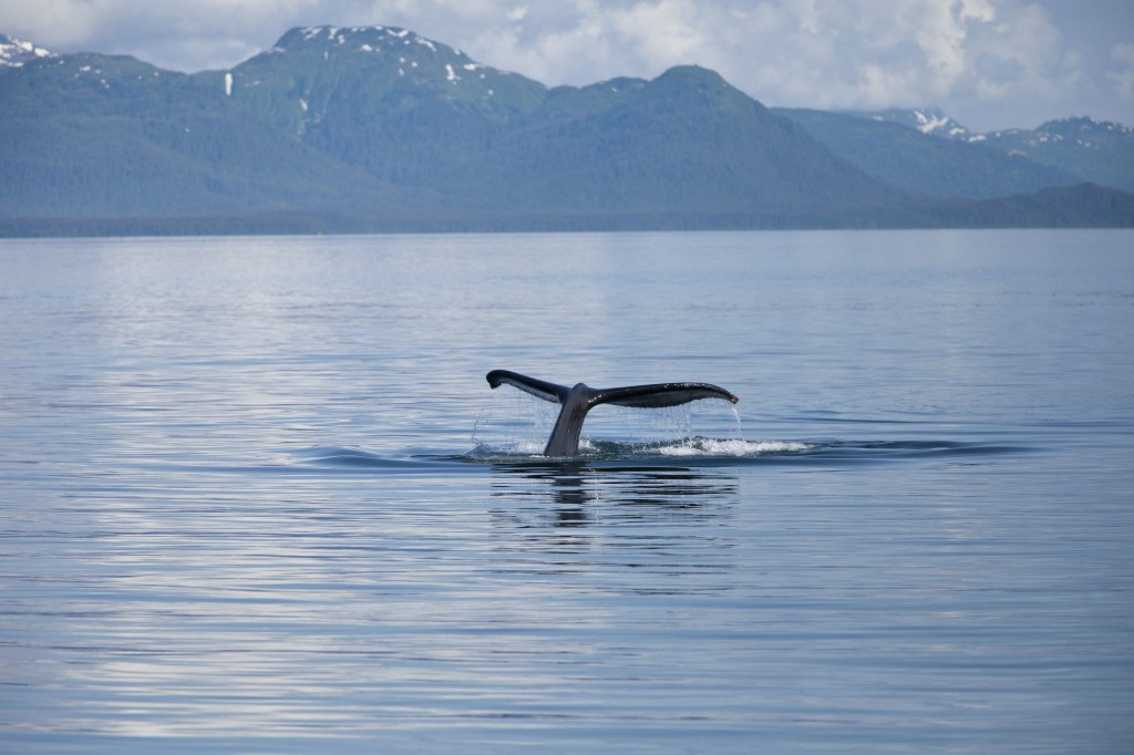 Icy Strait Point - Whale Watching Tour